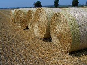 straw-bales-893802_640